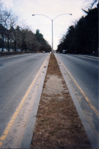 Center strip on Morton Street/Route 203, looking east, showing grass worn by riders attempting to cross